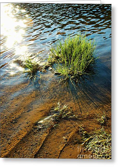 Blue Green Water Greeting Cards - Sunlight On Water Greeting Card by HD Connelly