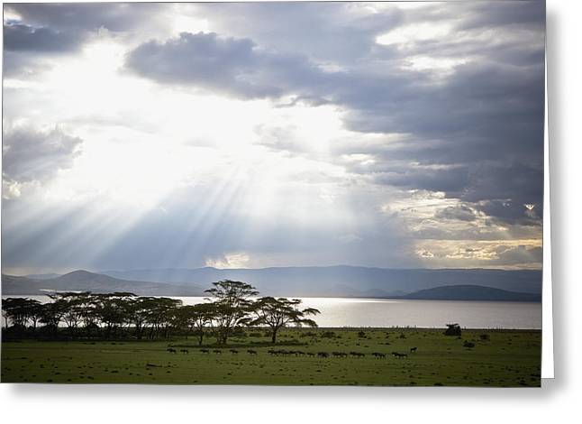 Reflection Of Sun In Clouds Greeting Cards - Sunlight Shines Down Through The Clouds Greeting Card by David DuChemin