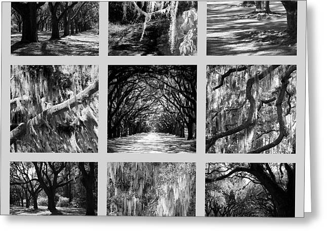 Old Savannah With Moss Greeting Cards - Sunlight through Live Oaks Collage Greeting Card by Carol Groenen