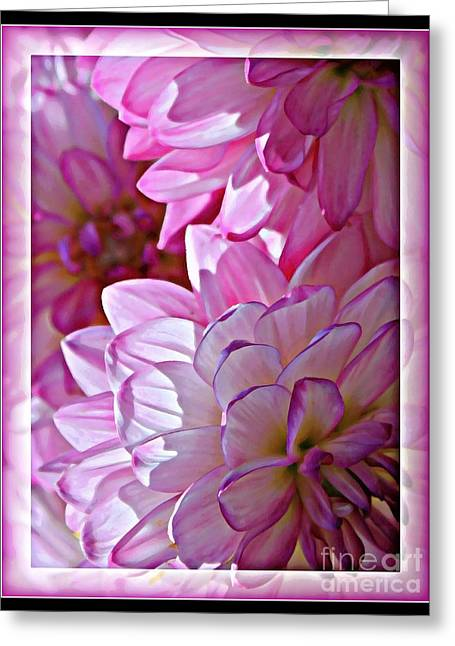 Sunlight On Flowers Greeting Cards - Sunlight through Pink Dahlias Greeting Card by Carol Groenen