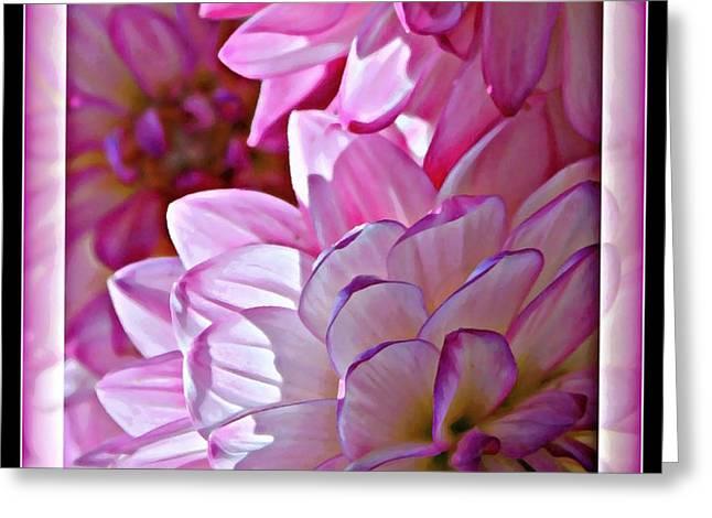 Sunlight through Pink Dahlias Greeting Card by Carol Groenen