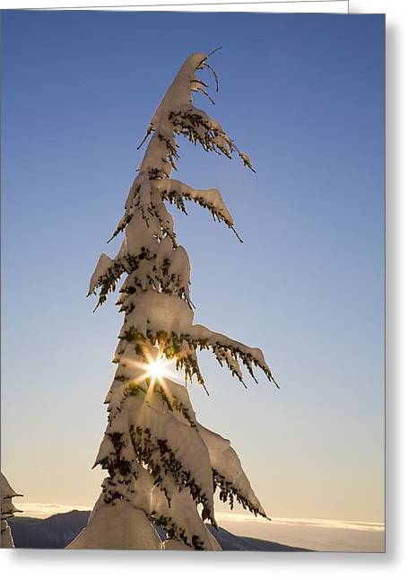 Sunlight Through Snow-covered Tree Greeting Card by Craig Tuttle
