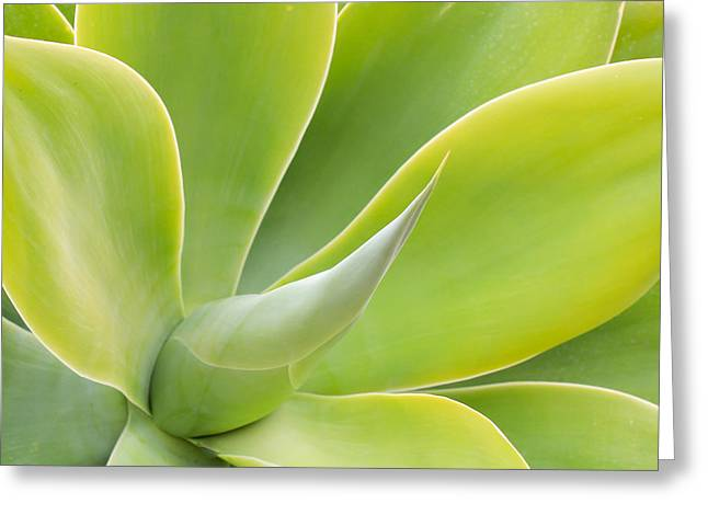 Nature Center Greeting Cards - Sunlit Agave Greeting Card by Heidi Smith