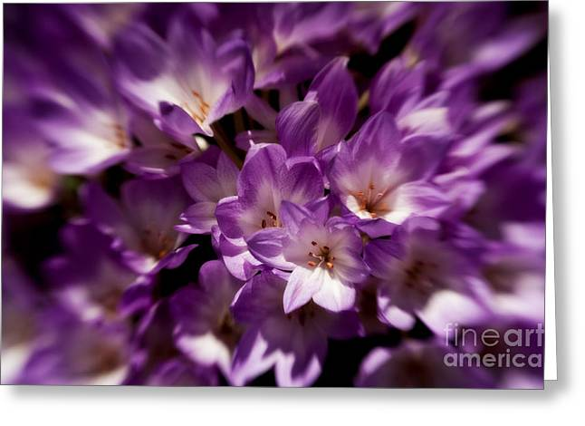 Van Dusen Botanical Garden Greeting Cards - Sunlit Cluster Greeting Card by Venetta Archer
