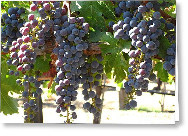 Grapevine Photographs Greeting Cards - Sunlit Grapes Greeting Card by Colleen Elise