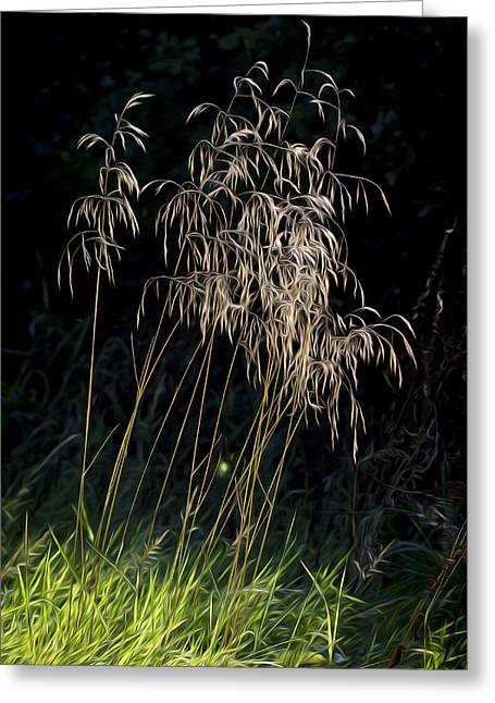 Sunlit Grasses. Greeting Card by Clare Bambers