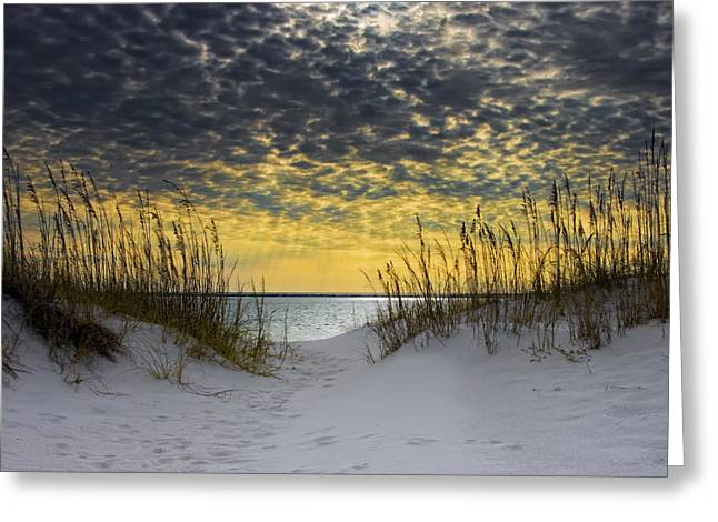 Point Greeting Cards - Sunlit Passage Greeting Card by Janet Fikar