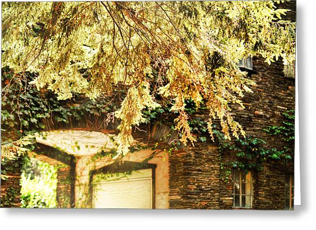sunlit stone building with grapevines Greeting Card by HD Connelly