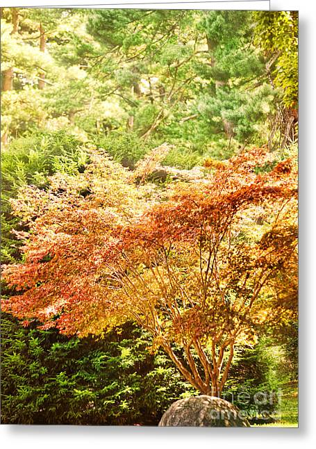 Sunlight Greeting Cards - Sunlit Tree Greeting Card by HD Connelly