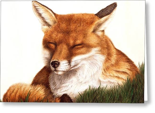 Wildlife Watercolor Greeting Cards - Sunnin Greeting Card by Pat Erickson