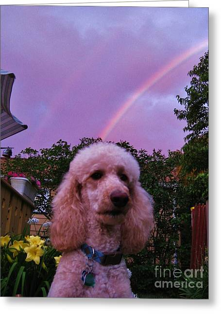 Double Rainbow Greeting Cards - Sunny and the Rainbows Greeting Card by Judy Via-Wolff