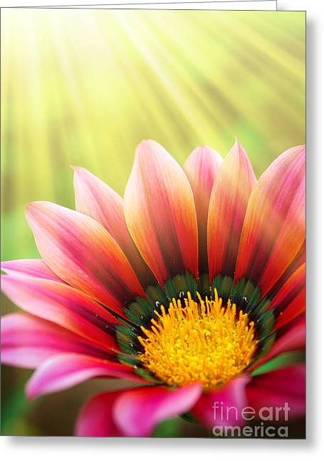 Germinate Greeting Cards - Sunny Daisy Greeting Card by Carlos Caetano