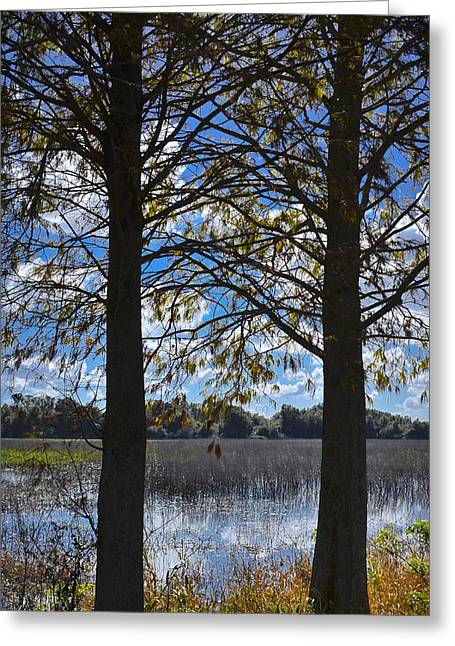 Florida Landscape Photography Greeting Cards - Sunny Day On The Pond Greeting Card by Carolyn Marshall