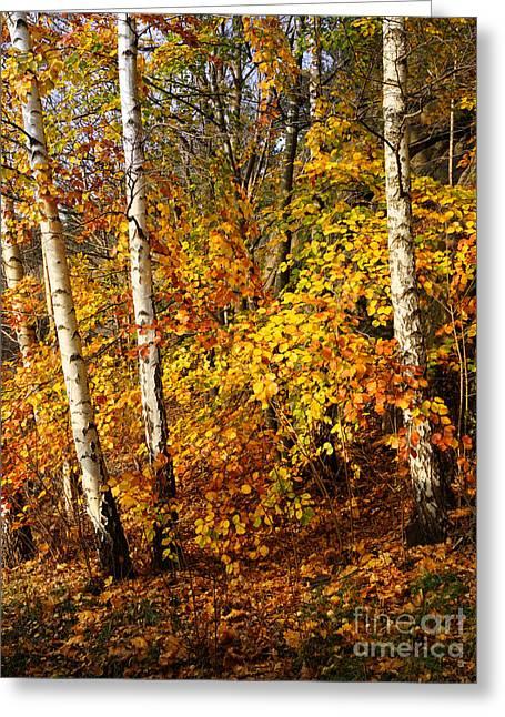 Sunny Fall Day Greeting Card by Lutz Baar