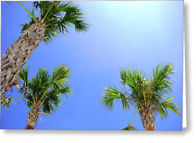 Breezy Greeting Cards - Sunny Florida Palms Greeting Card by Carolyn Marshall