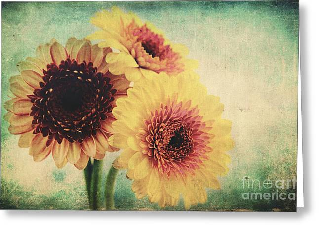 Floral Still Life Mixed Media Greeting Cards - Sunny Gerbera Greeting Card by Angela Doelling AD DESIGN Photo and PhotoArt