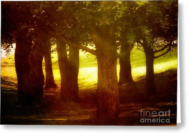Photoart Greeting Cards - Sunny Glade Greeting Card by Lutz Baar
