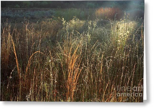 Morass Greeting Cards - Sunny Marsh Greeting Card by Carol Groenen