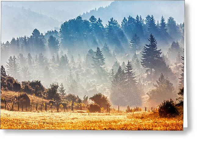 Summer Landscape Greeting Cards - Sunny Morning Greeting Card by Evgeni Dinev