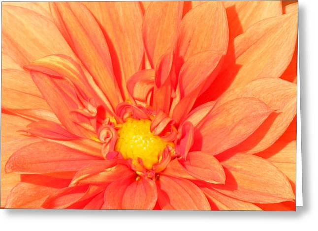 Becky Lodes Greeting Cards - Sunny orange Greeting Card by Becky Lodes