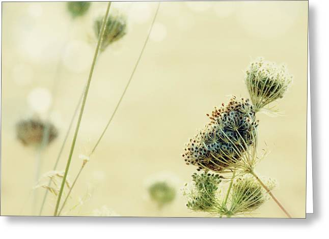 Lomo Greeting Cards - Sunny Queen Annes Lace Greeting Card by Danielle Denham