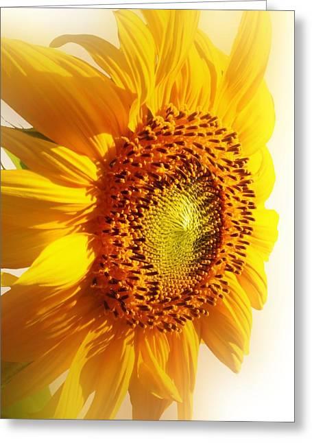 Lynnette Johns Greeting Cards - Sunny Softness Greeting Card by Lynnette Johns