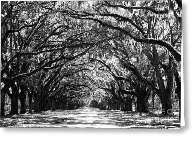 Oaks Greeting Cards - Sunny Southern Day - Black and White Greeting Card by Carol Groenen