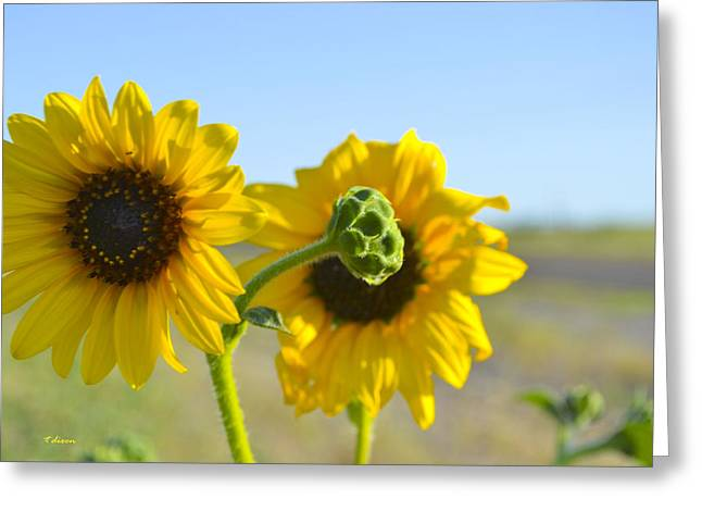 Sunnyside Up Greeting Card by Teresa Dixon