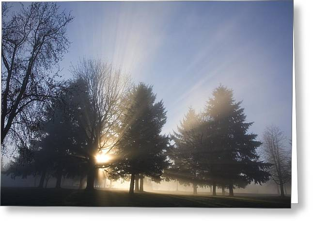 Foggy Day Greeting Cards - Sunray Through Trees And Fog Greeting Card by Craig Tuttle
