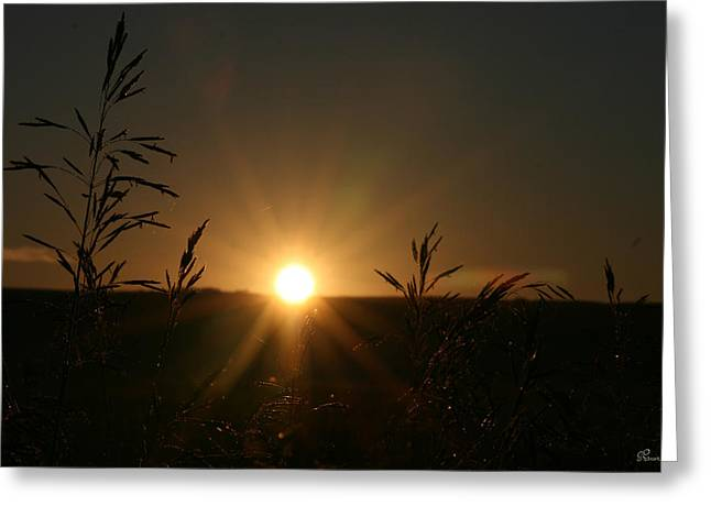 Sunrise And Spiderwebs Greeting Card by Andrea Lawrence