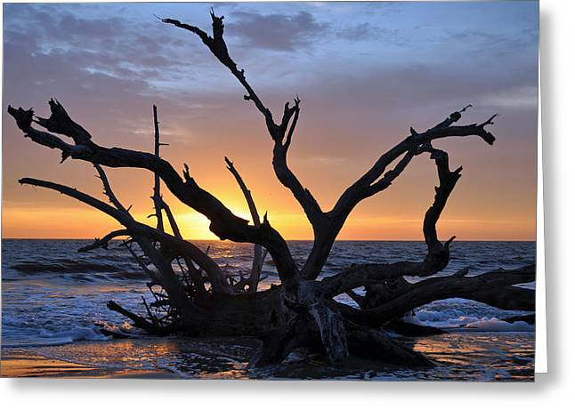 Sunrise At Driftwood Beach 5.2 Greeting Card by Bruce Gourley