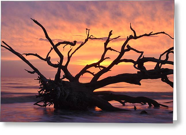 Sunrise On Beach Greeting Cards - Sunrise at Driftwood Beach 6.1 Greeting Card by Bruce Gourley