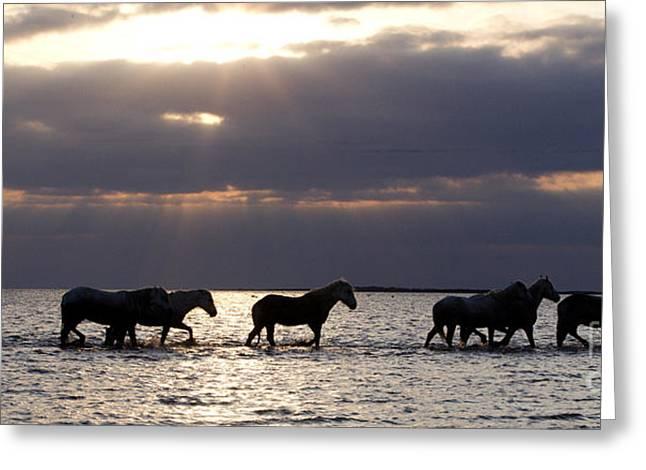Wild Horse Greeting Cards - Sunrise Horses Greeting Card by Carol Walker