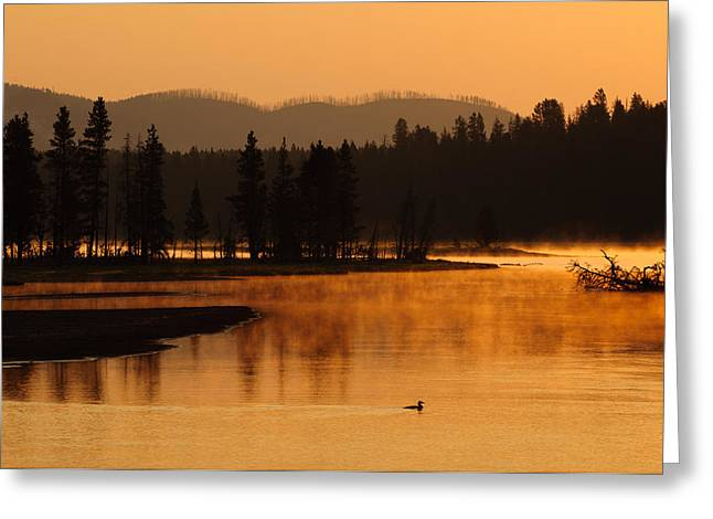 Meadow Willows Greeting Cards - Sunrise Near Fishing Bridge in Yellowstone Greeting Card by Bruce Gourley