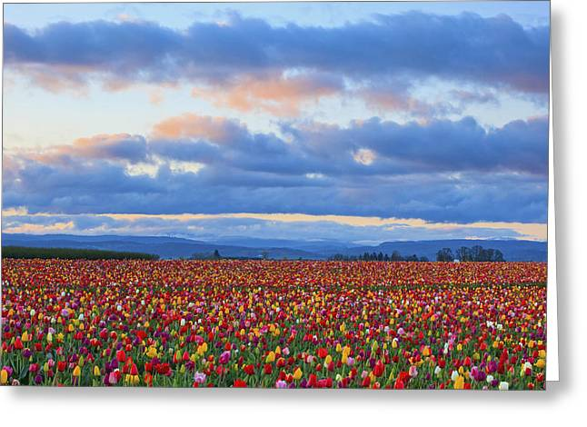 Woodburn Greeting Cards - Sunrise Over A Tulip Field At Wooden Greeting Card by Craig Tuttle