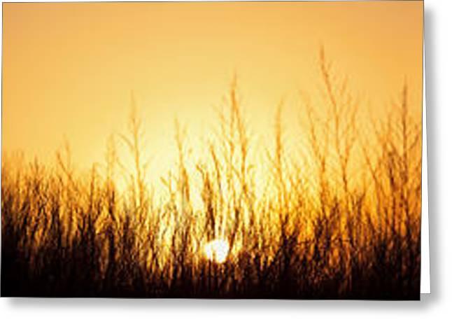 Prairie Photographs Greeting Cards - Sunrise Over Nachusa Grasslands Greeting Card by Steve Gadomski