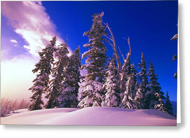 Sunrise Over Snow-covered Pine Trees Greeting Card by Natural Selection Craig Tuttle