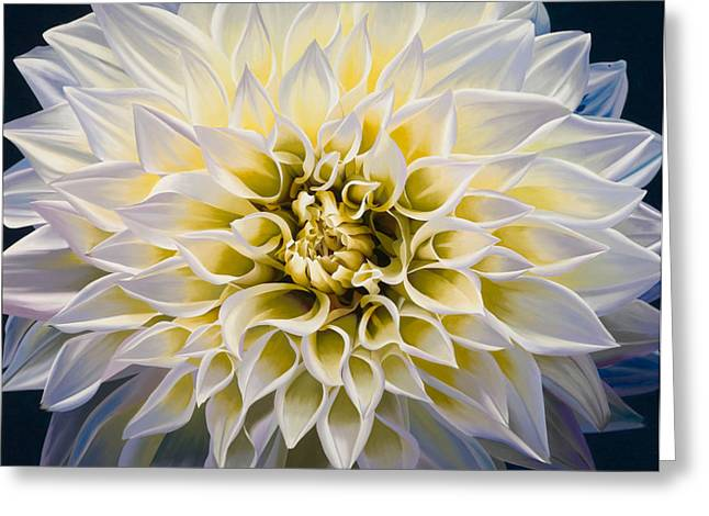 Flowers Greeting Cards - Sunrise Greeting Card by Sharon Von Ibsch