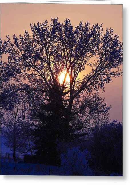 Snowy Evening Greeting Cards - Sunrise Through A Tree In Winter Greeting Card by Richard Wear