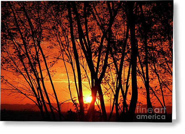 Mdf Mounted Print Greeting Cards - Sunrise Through the Trees Greeting Card by  Graham Taylor