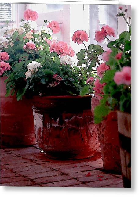 Sunporch Greeting Cards - Sunroom with Geraniums Greeting Card by Elaine Frink