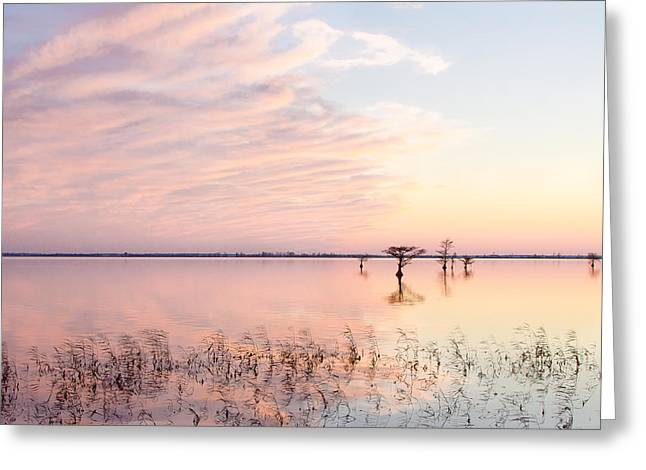 Wildlife Refuge. Greeting Cards - Sunset - Pretty in Pink Greeting Card by Bill Swindaman