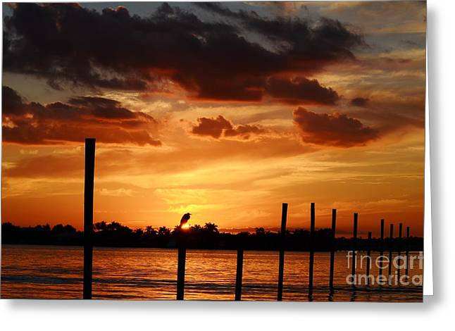 St. Lucie River Greeting Cards - Sunset 1-1-12 Greeting Card by Lynda Dawson-Youngclaus