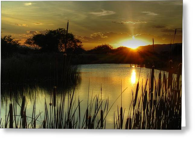 Tam Ryan Greeting Cards - Sunset and Cattails Greeting Card by Tam Ryan