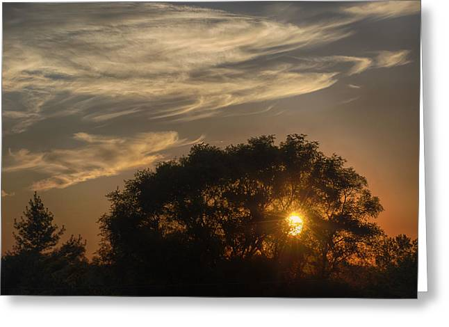 Sunset at the Oasis Greeting Card by Joan Carroll