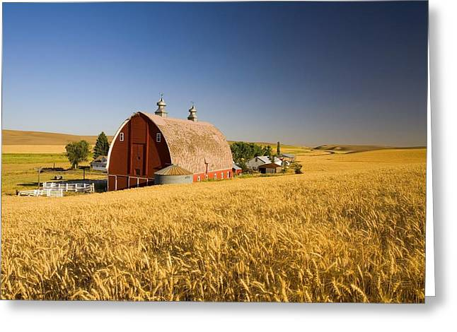 Tuttle Greeting Cards - Sunset Barn And Wheat Field Steptoe Greeting Card by Craig Tuttle