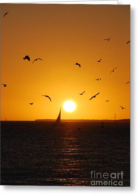 Reflections Of Sky In Water Photographs Greeting Cards - Sunset Birds Key West Greeting Card by Susanne Van Hulst