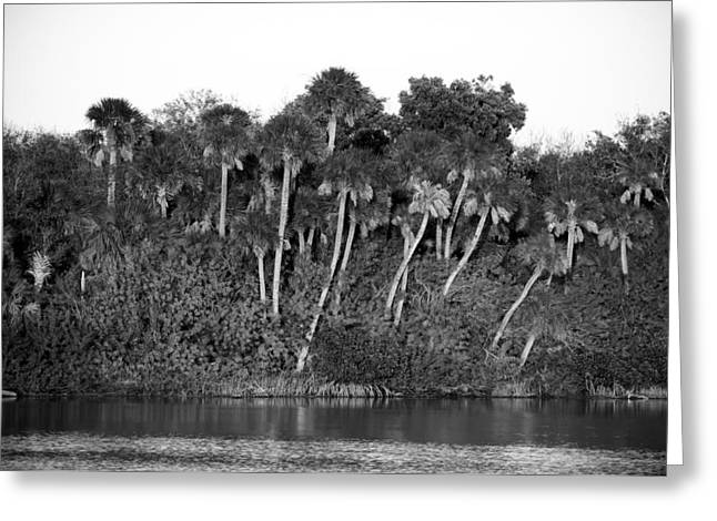 Wildlife Refuge. Greeting Cards - Sunset Black and White Greeting Card by Rich Franco