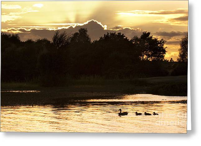 Ducklings Greeting Cards - Sunset by the lake Greeting Card by Angel  Tarantella