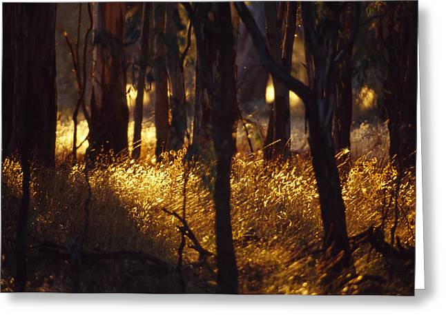 Sunset Falls Over Seeding Grasses Greeting Card by Jason Edwards